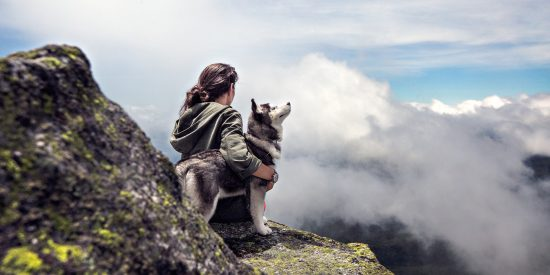 Partir en week-end avec son animal de compagnie
