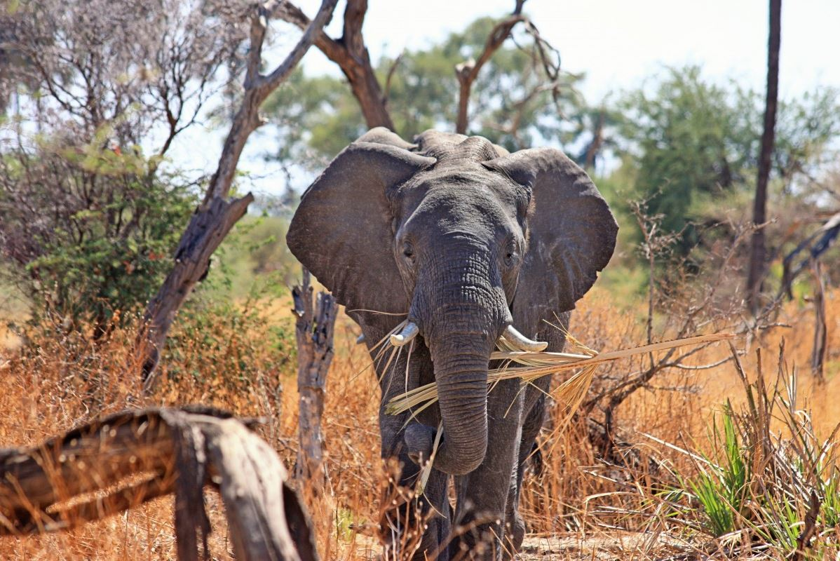 Un séjour en Afrique pour dépasser ses limites
