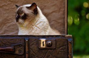 Chat qui est assis dans une vieille valise marron